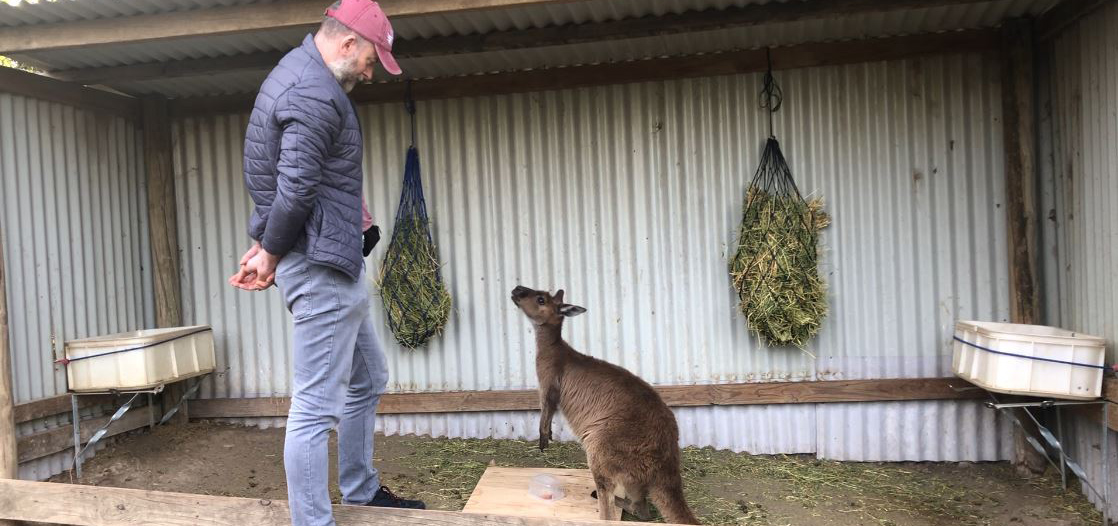 Image - What's up Skip?  Kangaroos really can 'talk' to us